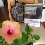 先祖からの誕生日の贈り物 〜原爆と戦死と沖縄民謡と誕生日と〜